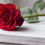 オスカー・ワイルド ナイチンゲールとばらの花
